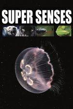 Supersenses